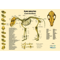 Gyvūnų anatomijos plakatai (1 vnt)